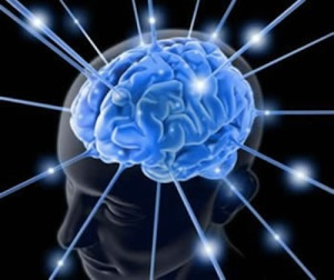 Il cervello dal sito aciclico.com